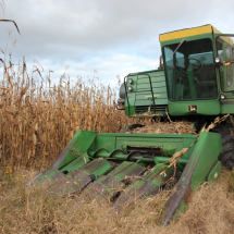 The corn harvester cut down the corn stalks and removes the kernels from the cob