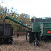 Once the harvester is full, it transfers the corn into a truck that brings it back to base to be processed.