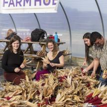 Corn-Braiding-at-the-Farm-Hub3