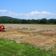 Small grains harvest along Route 209, August 2014