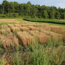 Small grains planting along Route 209