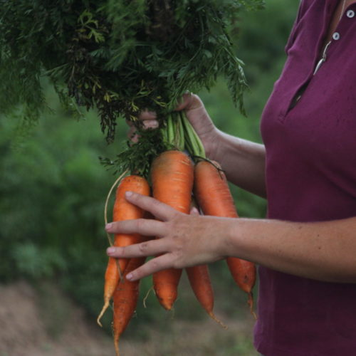 Extending the Growing Season Through Root Crops