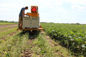 Machine harvesting edamame