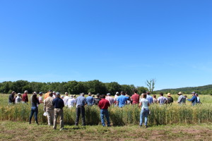 Farmers, bakers, millers, distillers and brewers came to the Farm Hub for CCE's annual Small Grains Day in June.