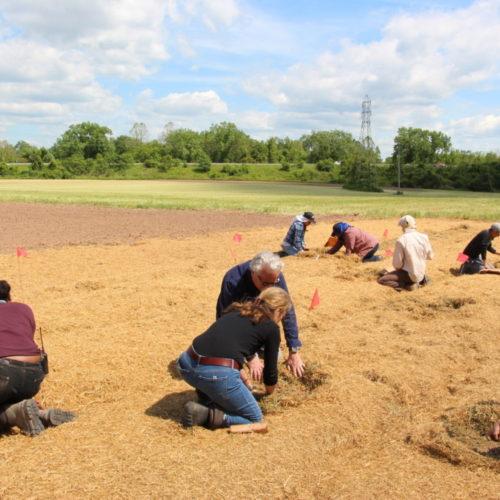 Seed Sanctuary Planting 2017